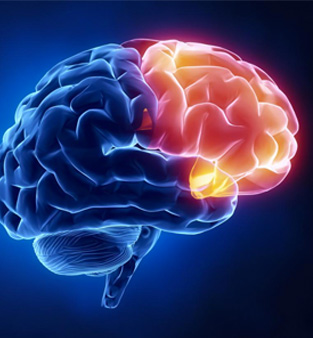 Frontal lobe assist